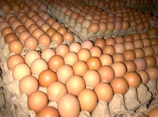 Telur Ayam.jpg